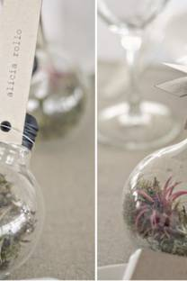 Light bulb terrariums- a tutorial