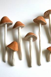reason to celebrate | edible mushrooms