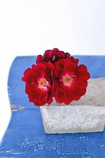 single bloom concrete vases