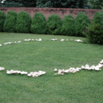 Reason to celebrate | fairy ring