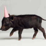 reason to celebrate | party animals