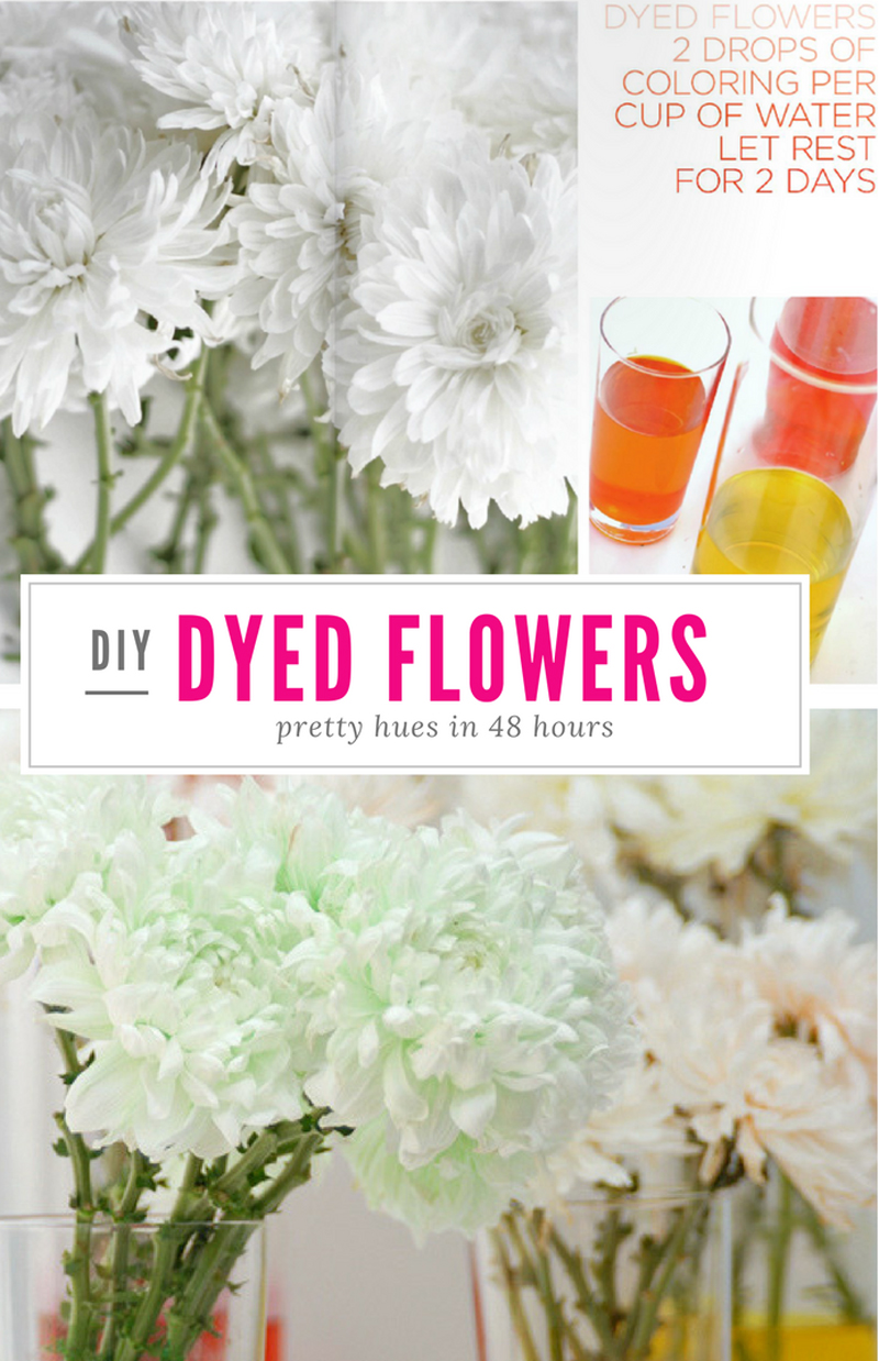 Dyed Flowers are so pretty! Try it out, click for the DIY