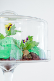 chocolate mint terrarium cake
