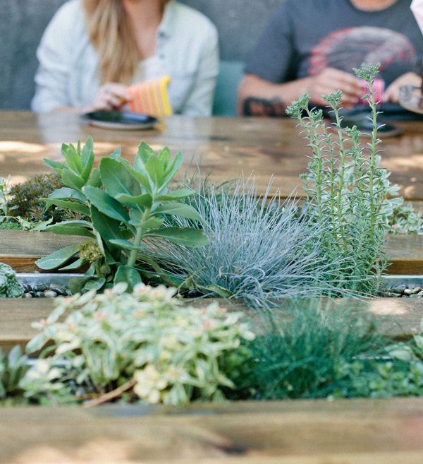 Succulents planted right into a wooden table!