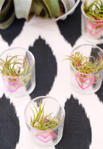 air plant favors