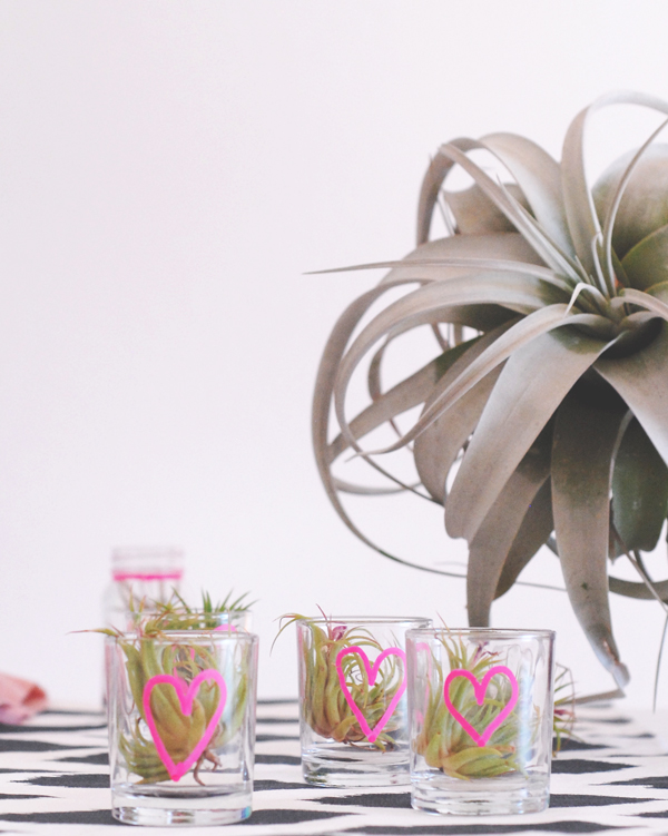 Air plant wedding favors