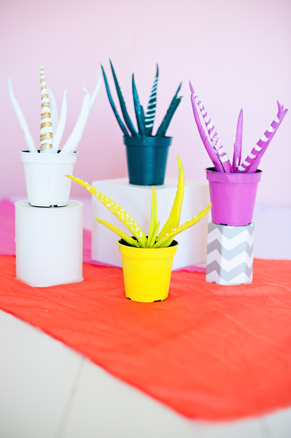 Painted Aloe plant favors