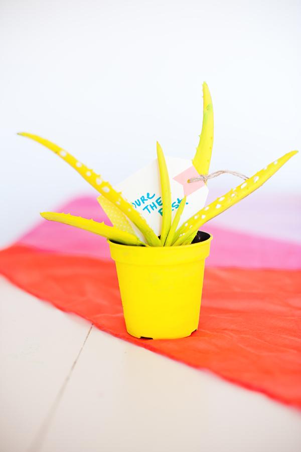 Painted Aloe Plant party favors