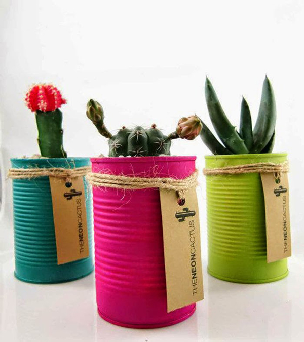 Cactus gifts