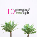 10 great types of cactus to gift