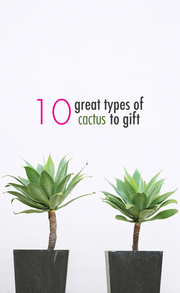 10 great types of cactus to gift (click to see them all!).