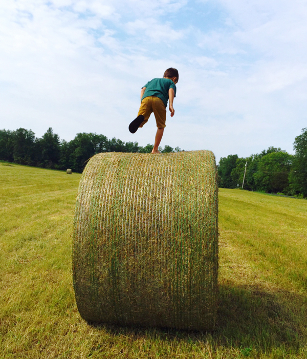 Running on the hay
