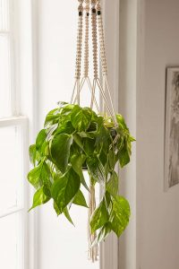 hanging planter urban