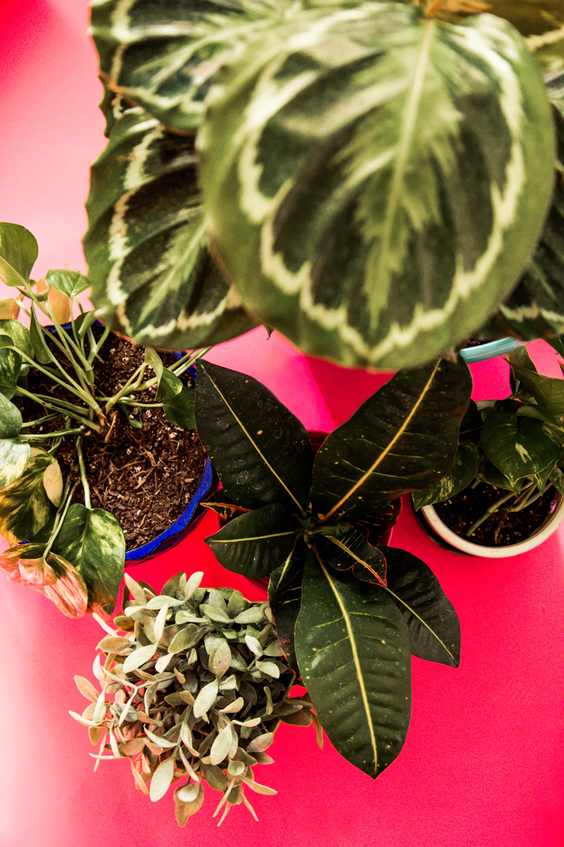 DIY Potted Plants