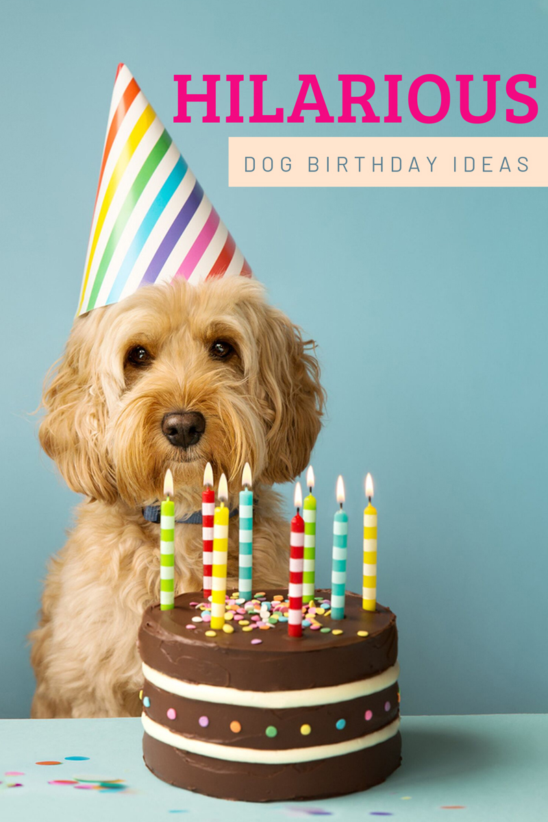 28 Creative Ideas for Throwing a Dog Birthday Party
